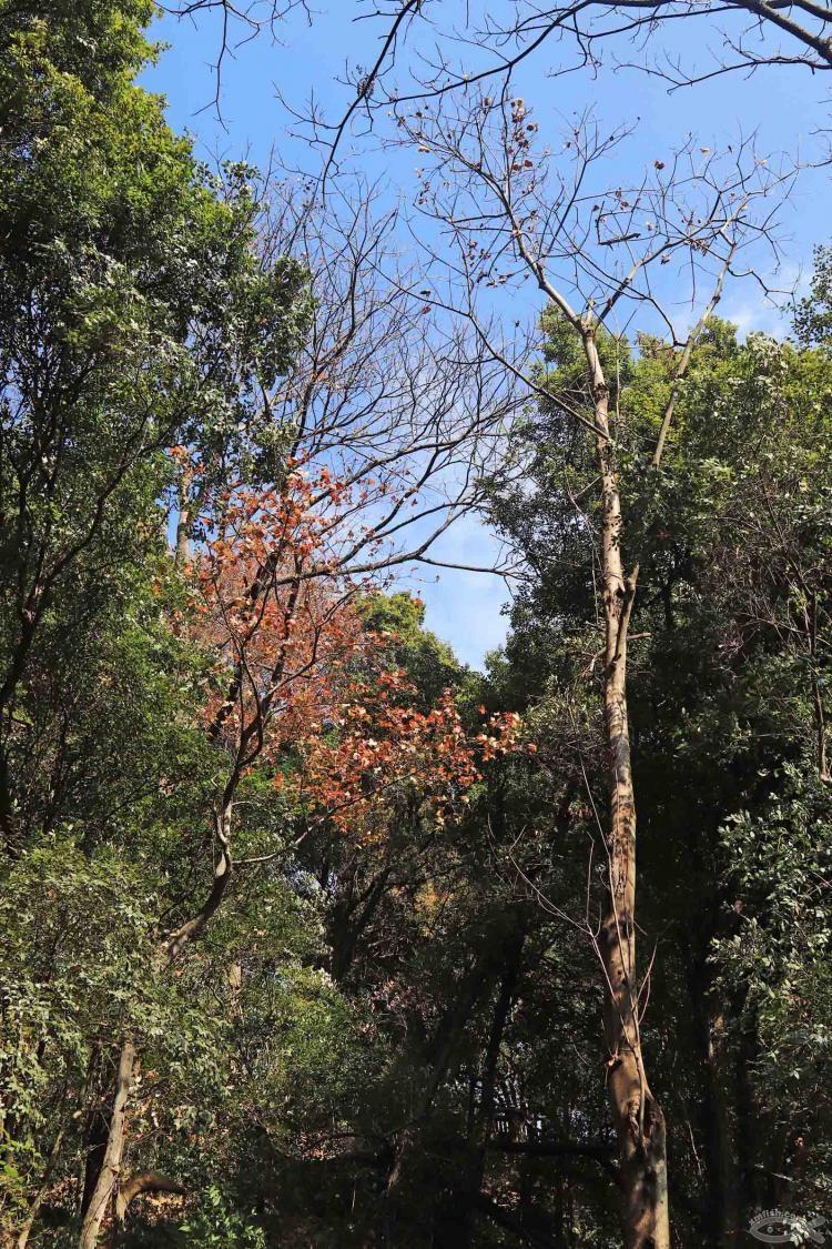 [06-23]龙岩莲花山公园_21920799