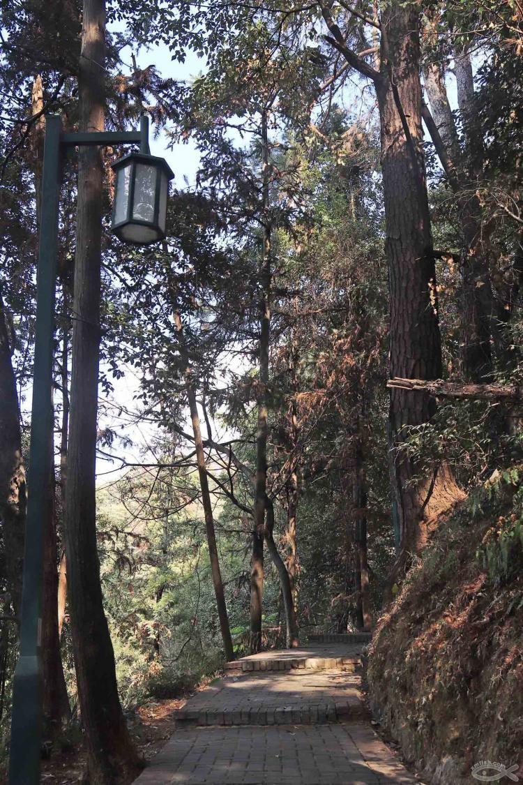[06-23]龙岩莲花山公园_21920797
